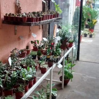 Estilo natural vivero viveros y jardiner a avenida e for Viveros en rosario