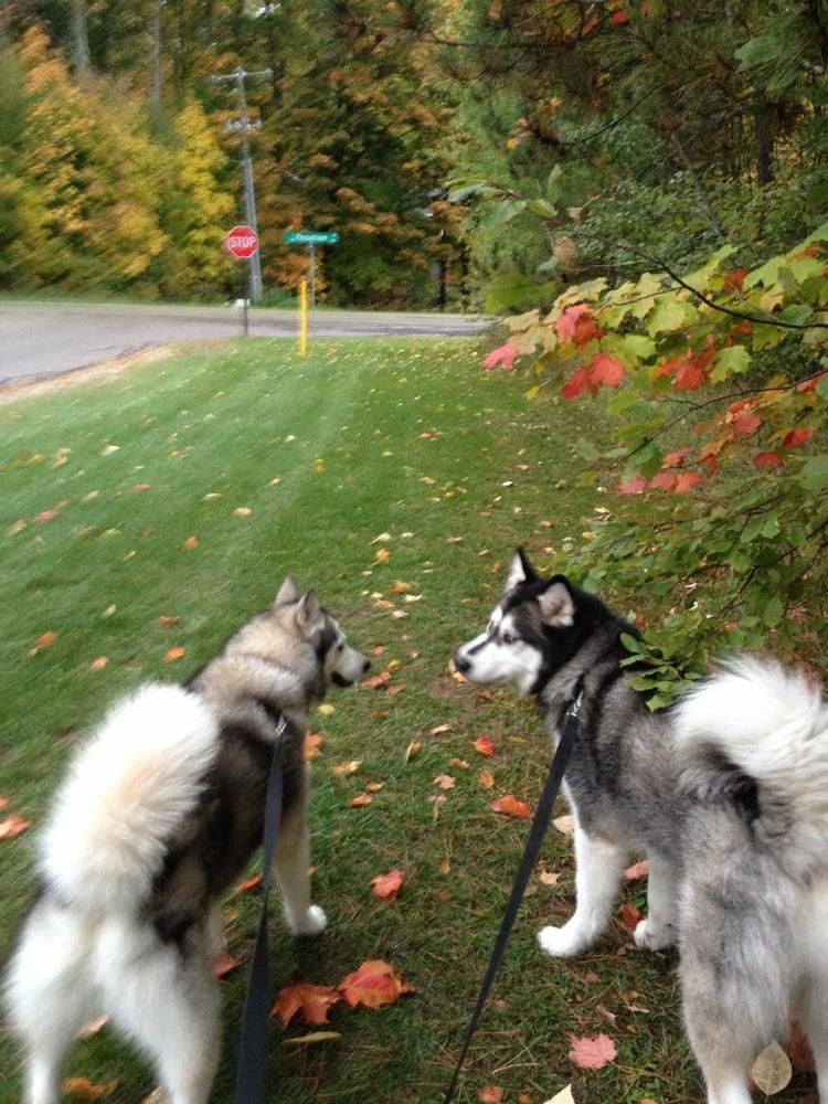 MacGregor's Pet Pantry: 203 Clark St, Harbor Springs, MI