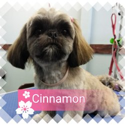 Charisma dog grooming 41 photos 12 reviews pet groomers photo of charisma dog grooming puyallup wa united states solutioingenieria Image collections