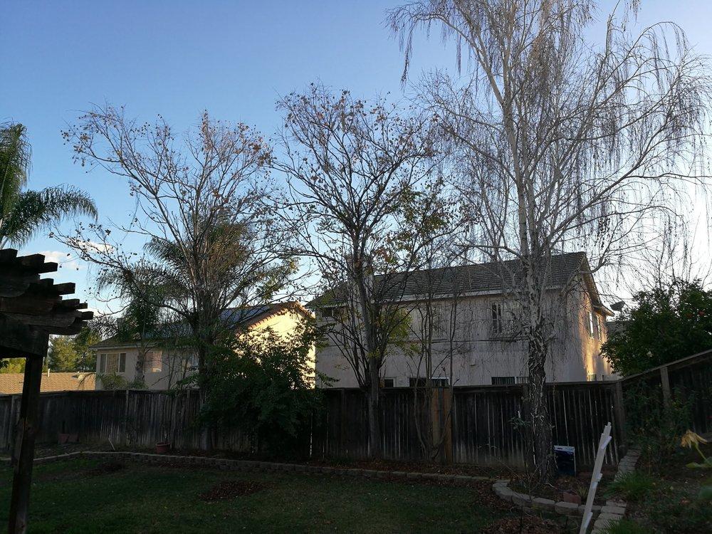 Diamond Tree Service: 31938 Temecula Pkwy, Temecula, CA