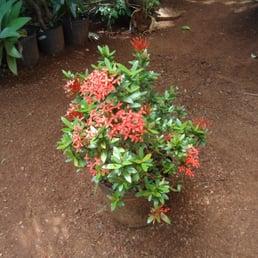 Photos for londri jardinagem paisagismo yelp for Paisagismo e jardinagem
