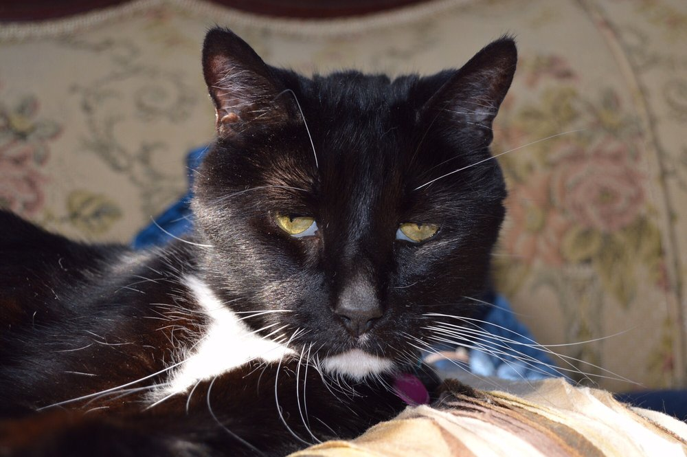 Peaceful Pet Passage: 2709 S Queen St, York, PA