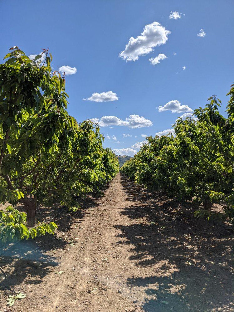 U Pick Orchards