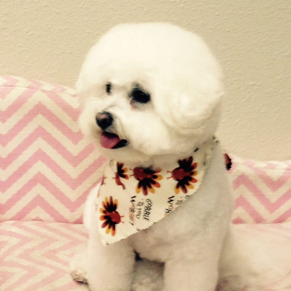 Bow Wow Beautiful Pet Spa
