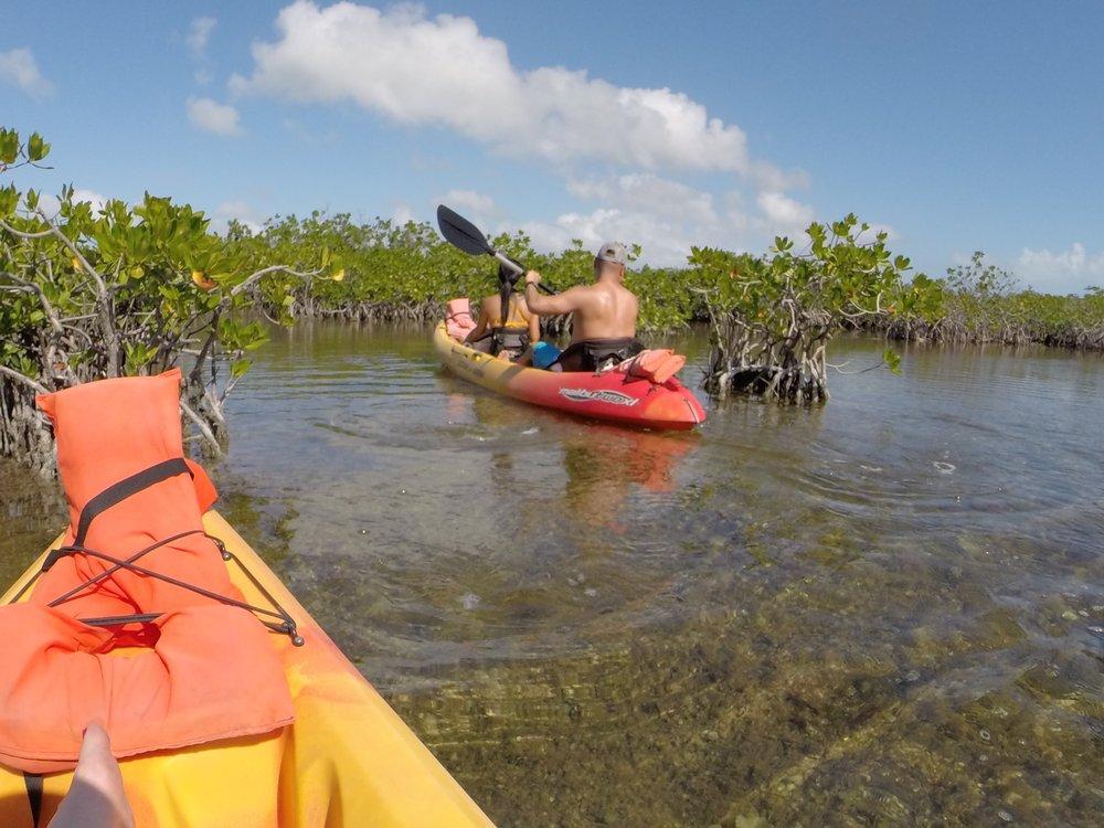 Key West Eco Tours: 231 Margaret St, Key West, FL