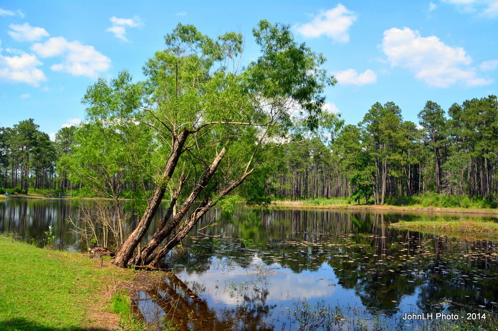 Desoto National Forest - Aiery Lake Recreation Area: 188-216 City Rd, Perkinston, MS