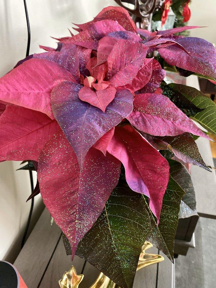 All 4 U Flowers: 23 Main St S, Baker, MT