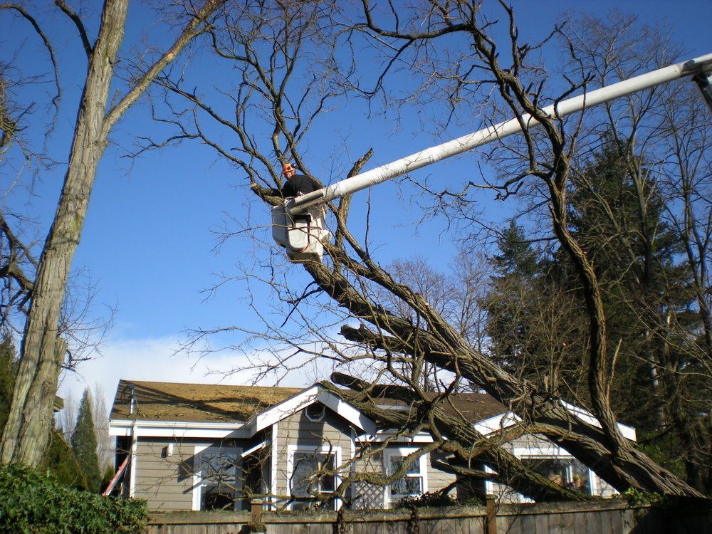 Mike's Affordable Tree Service: 7016 147th Ave NE, Lake Stevens, WA