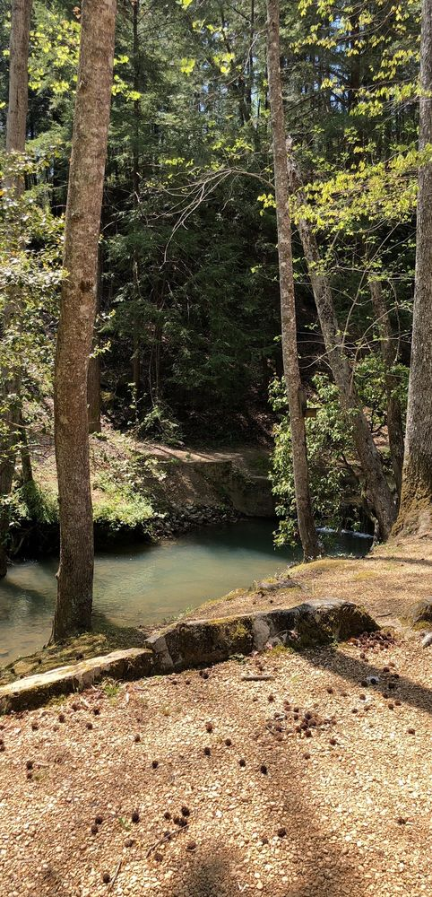 Natural Bridge Park: County Rd 314, Natural Bridge, AL