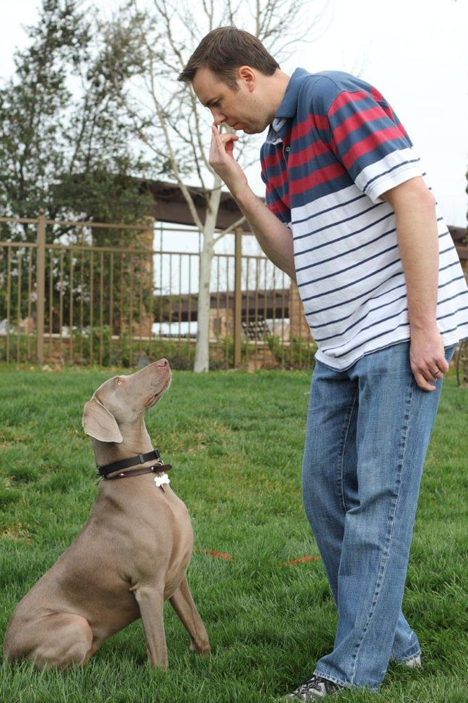 how to become a dog trainer in california