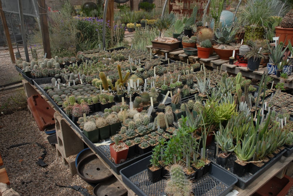 Plants For the Southwest