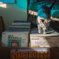 Foto de Love Garden Sounds - Lawrence, KS, Estados Unidos. Cats and vinyl