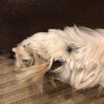 The Pet Resorts - 4343 Dunwoody Park, Dunwoody, GA - 2019