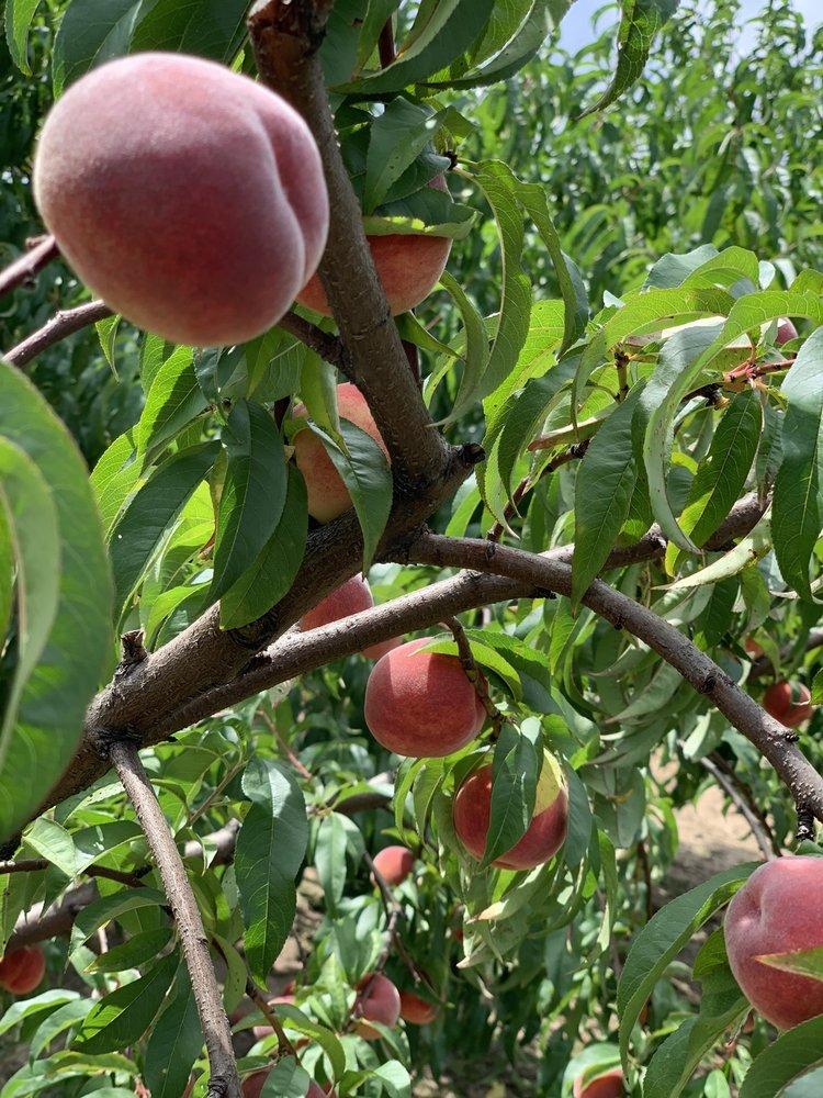 Cranes U-Pick Farm: 6017 124th Ave, Fennville, MI