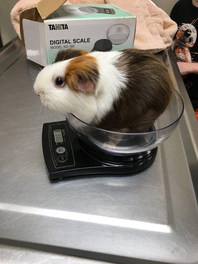 Tassajara Veterinary Clinic: 3436 Camino Tassajara, Danville, CA