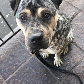 Woodland Ca Dog Training