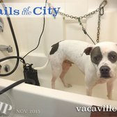 Tails of the city dog salon 60 photos 68 reviews pet groomers photo of tails of the city dog salon vacaville ca united states solutioingenieria Gallery