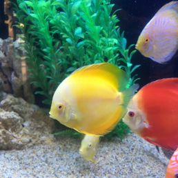 Best 12 Pet Stores in Catalina, CA with Reviews - YP.com