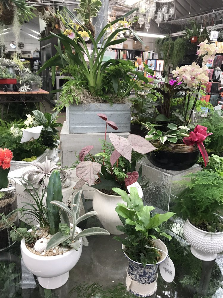 Photo Of Orchard Nursery Florist Lafayette Ca United States Succulent Arrangements