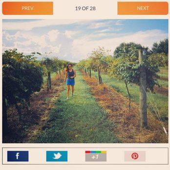 Lakeridge Winery & Vineyards - 465 Photos & 204 Reviews