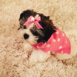 Worldwide Puppies Kittens 34 Photos 55 Reviews Pet Stores