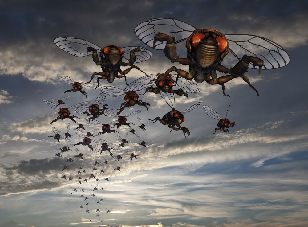 Southwest Bug & Pest: 763 Jardine, Bozeman, MT