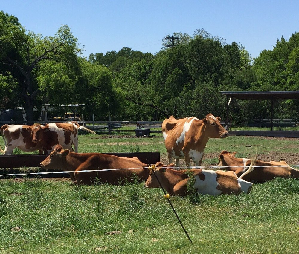 Lucky Layla Farms