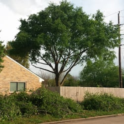 Photo Of Garcia S Professional Tree Service Houston Tx United States The Back