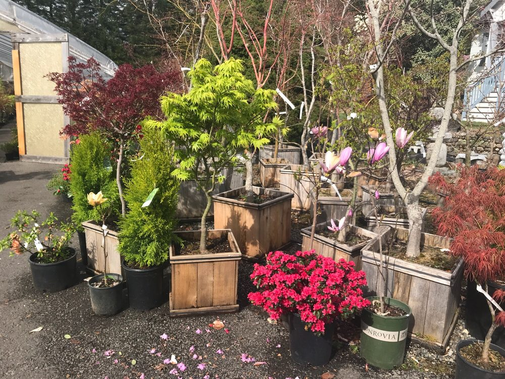 Yang's Nursery & Landscaping: 14903 Peacock Hill Ave NW, Gig Harbor, WA