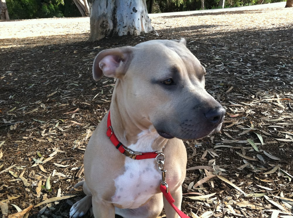 Bark Busters Home Dog Training San Diego