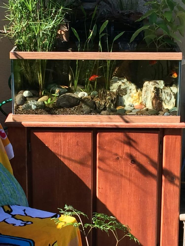 Aquarium Care: Alameda, CA