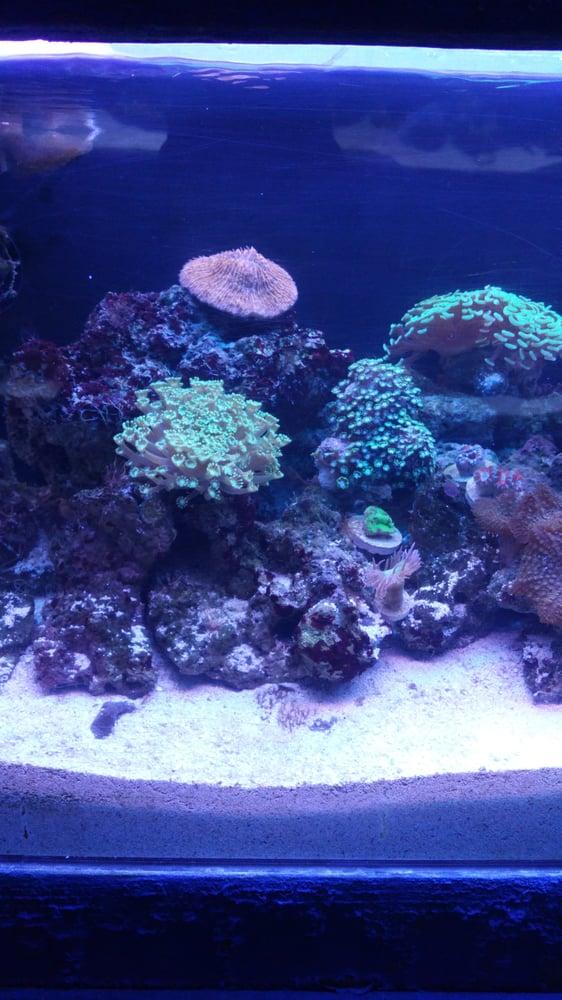 T t marine aquarium koi pond 34 reviews aquarium for Pond aquarium