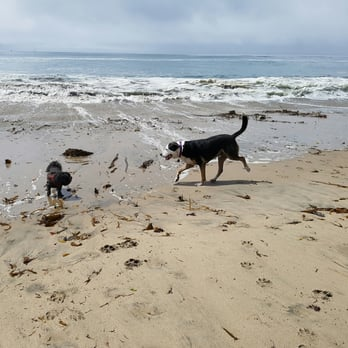 Photo Of Mitchell S Cove Beach Santa Cruz Ca United States