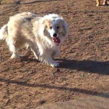 Tails N Trails Dog Park Arlington Tx