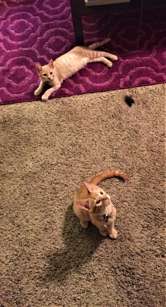 Sound Hound Pet Care Services: Yuba City, CA