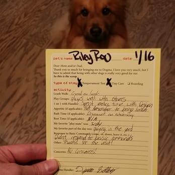 dogma dog care 11 photos 31 reviews pet groomers 4790 wright dr se smyrna ga phone number yelp