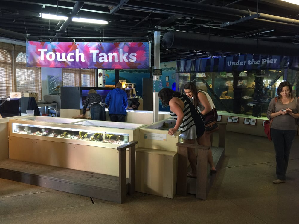 Did Anyone Say Touch Tanks Yelp