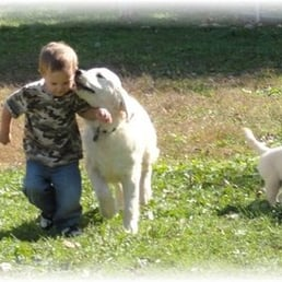 Yelp Reviews for Hearts of Gold Retrievers - 10 Photos - (New) Pet