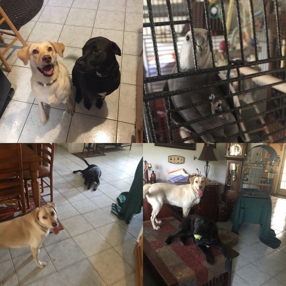 Fuzzy Friends Pet Care: 708 Toledo Pl, Brandon, FL