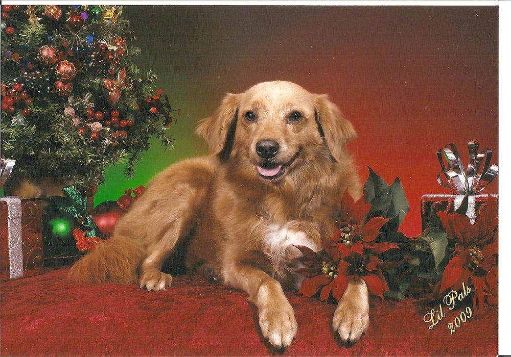 Canine Classics: 8904 Village Shops Dr, Fairfax Station, VA