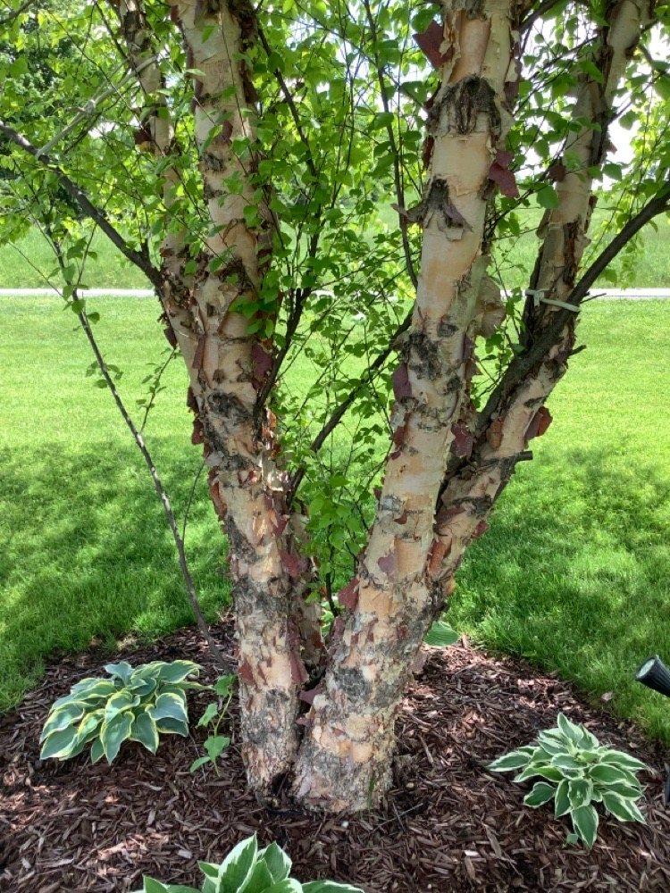 Davis Tree Farm: Walter Davis Rd, Edmeston, NY