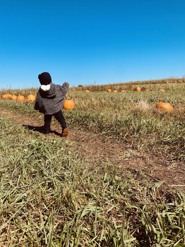 Kerby Farm Pumpkin Patch: 15943 158th, Bonner Springs, KS