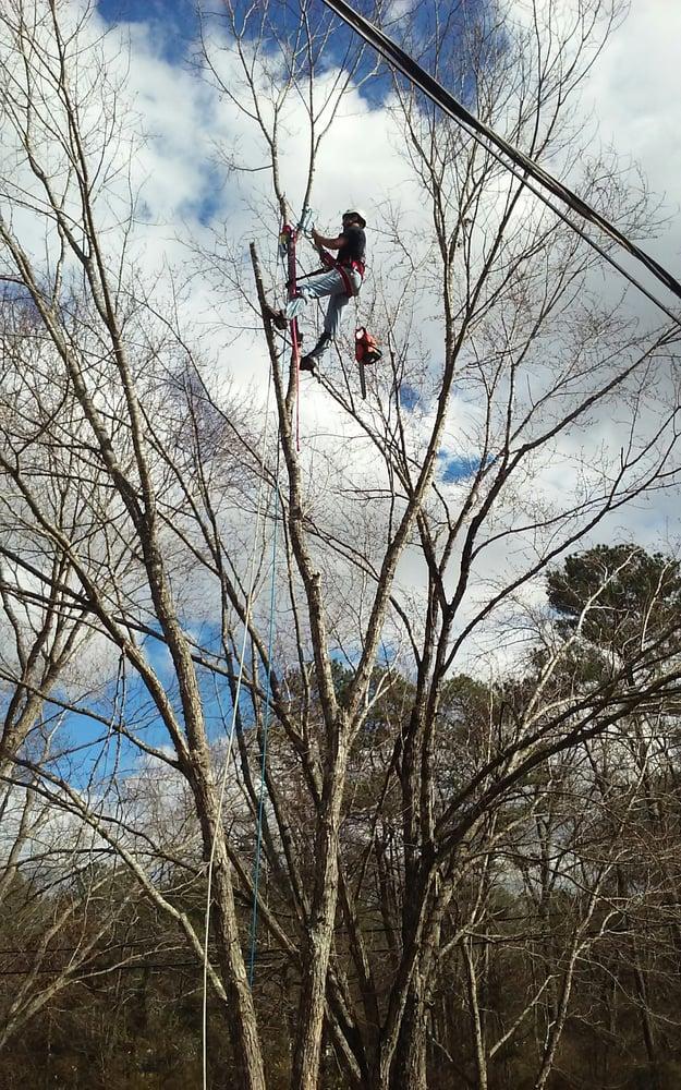McDaniel Tree Services: 8355 Old Hwy 31, Morris, AL