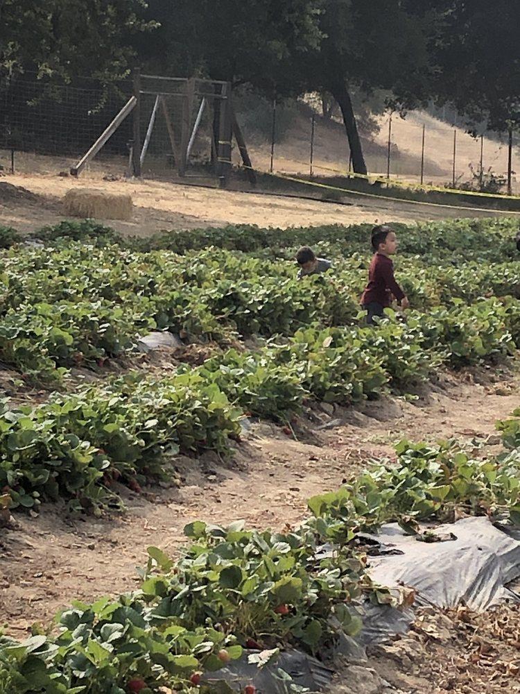 Berry Island Farms: 10385 Watsonville Rd, Gilroy, CA