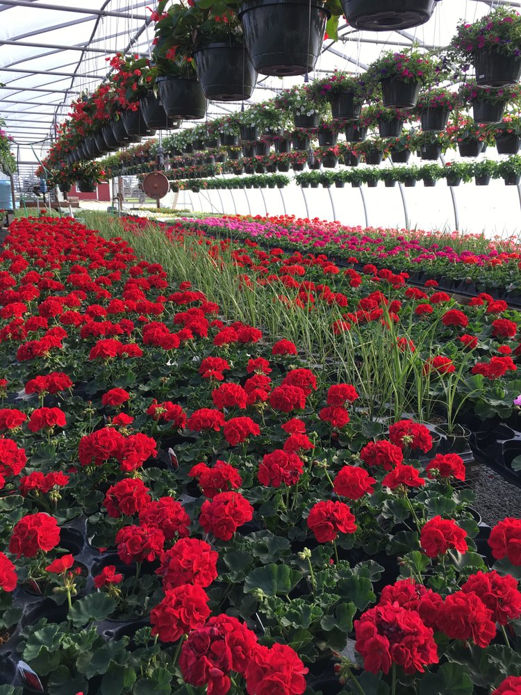 Sunnyside Greenhouses: 3185 E 700th N, Greenfield, IN