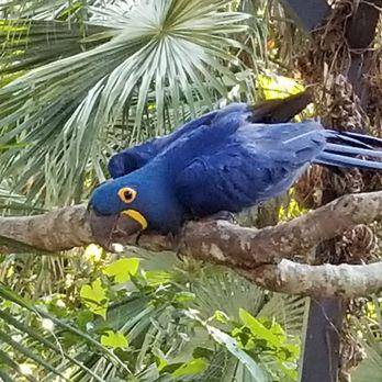 Amazing Sarasota Jungle Gardens   310 Photos U0026 113 Reviews   Tours   3701 Bay Shore  Rd, Sarasota, FL   Phone Number   Yelp