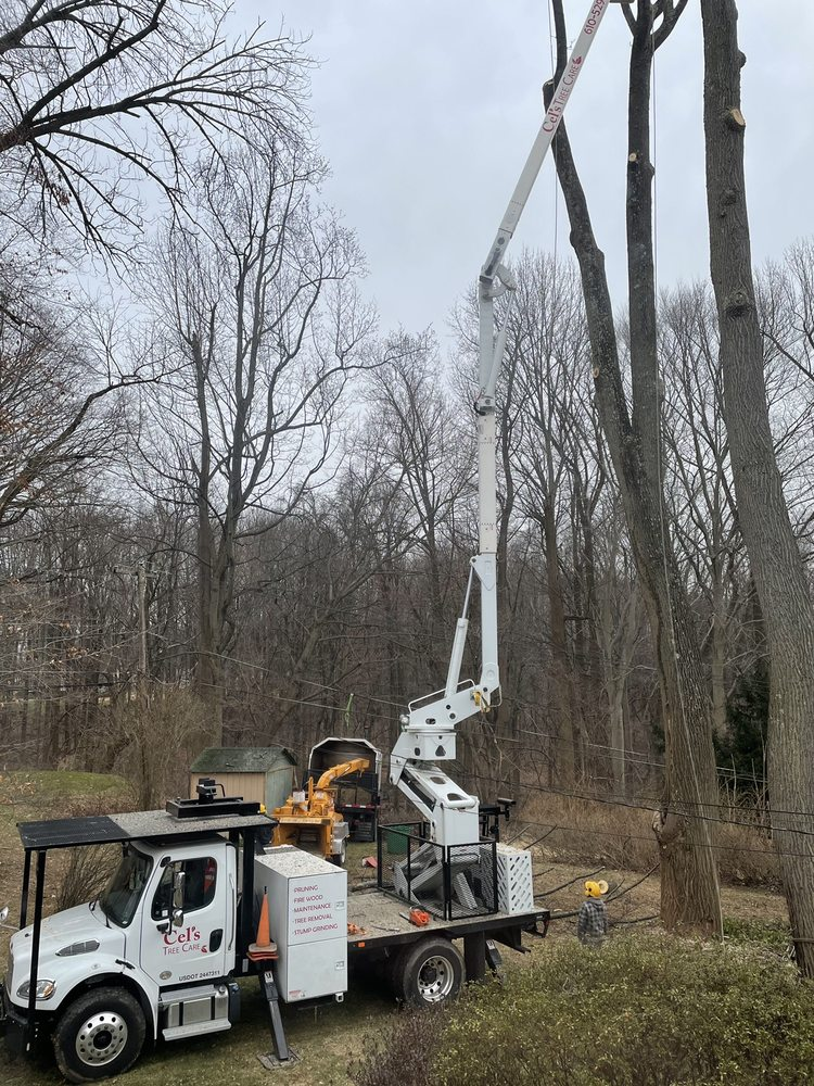 Cel's Tree Care: 505 Iacono Ct, Boothwyn, PA