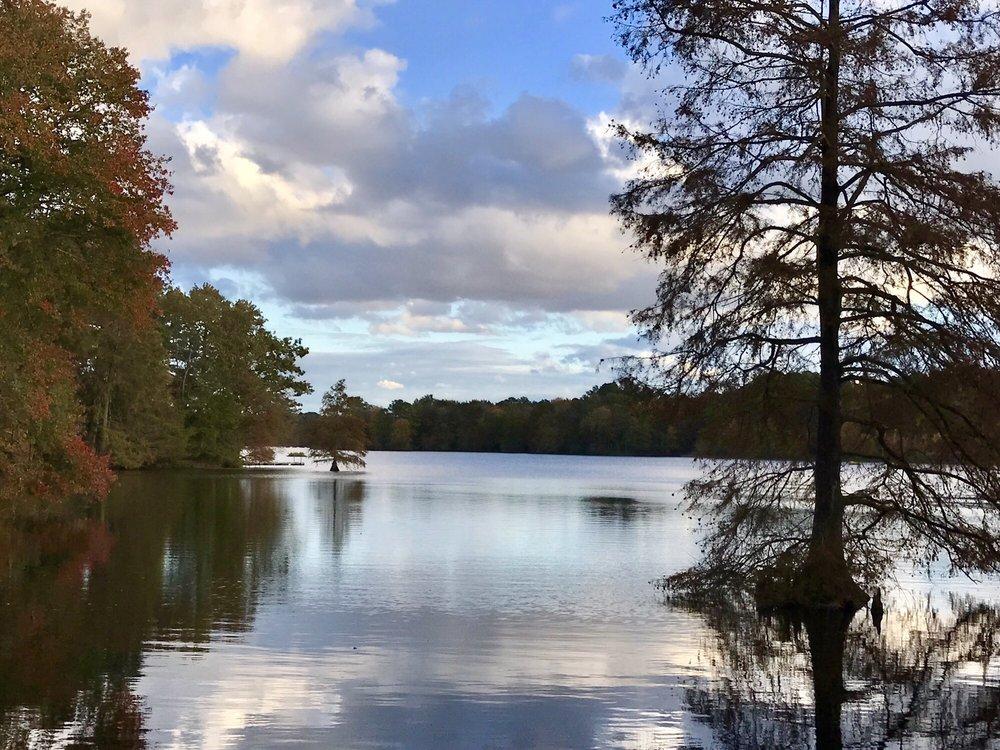 Trap Pond State Park: 33587 Bald Cypress Dr, Laurel, DE