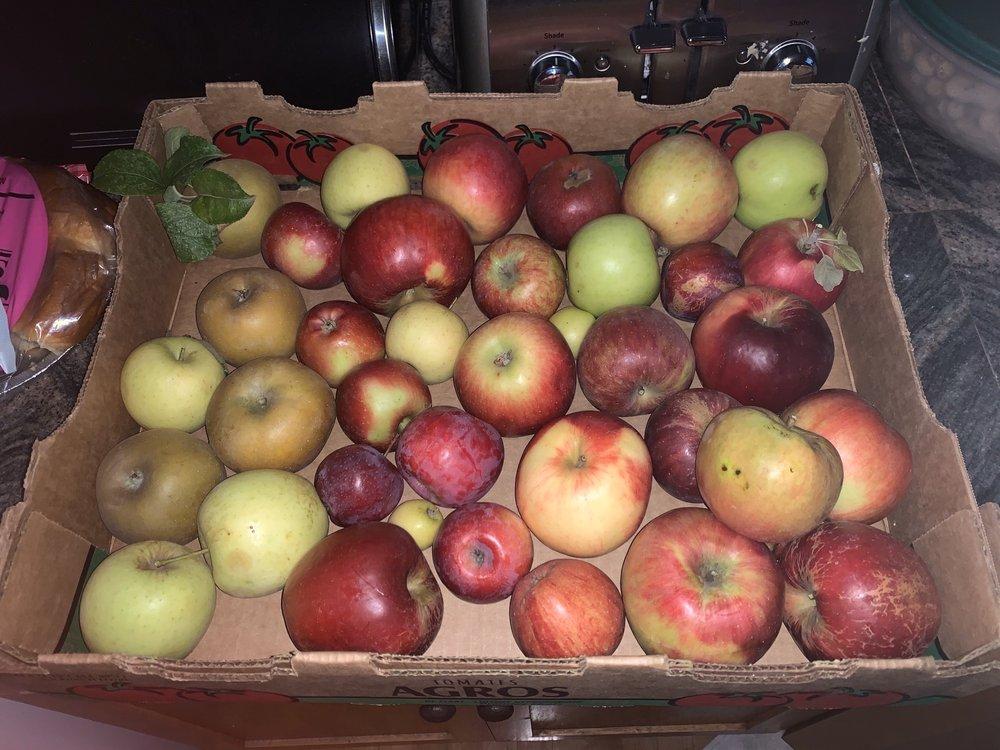 Sherwood Orchards