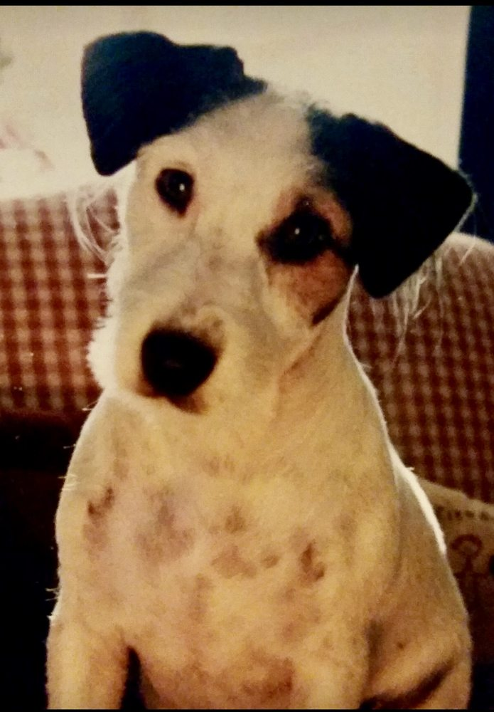 Lilah Rose -  All Pets Pet Sitting Service: Toledo, OH